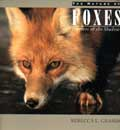 Foxes - Hunters of the Shadows
